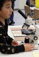 Biologie-am-BBG---Mikroskopieren